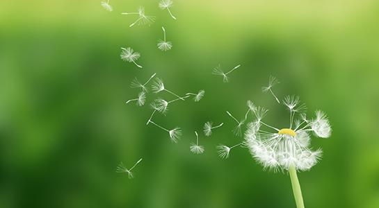 Aktuelles zu Pollen und Allergien